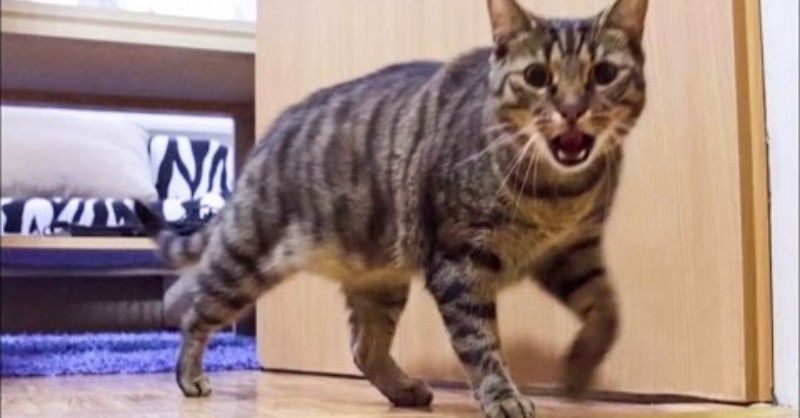 Diese Katze flippt völlig aus, wenn sich die Tür