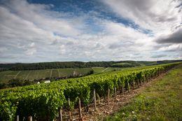 Le village de Fleys dans le vignoble de Chablis  © BVIB / IBANEZ A