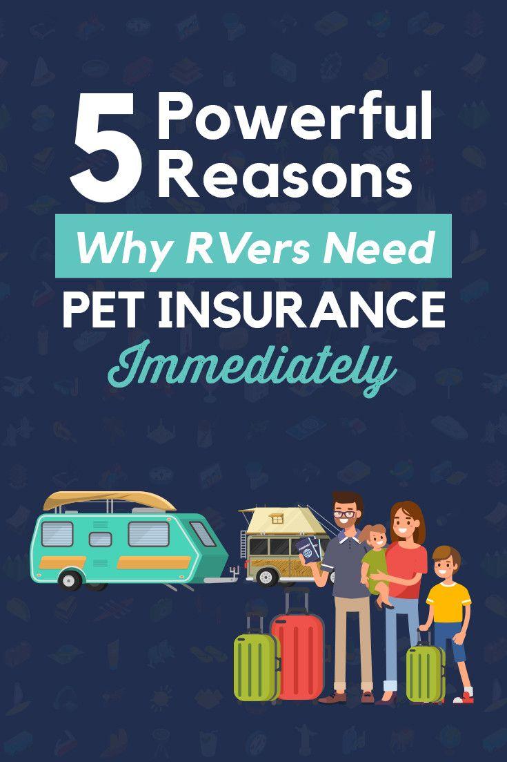5 powerful reasons why rvers need pet insurance