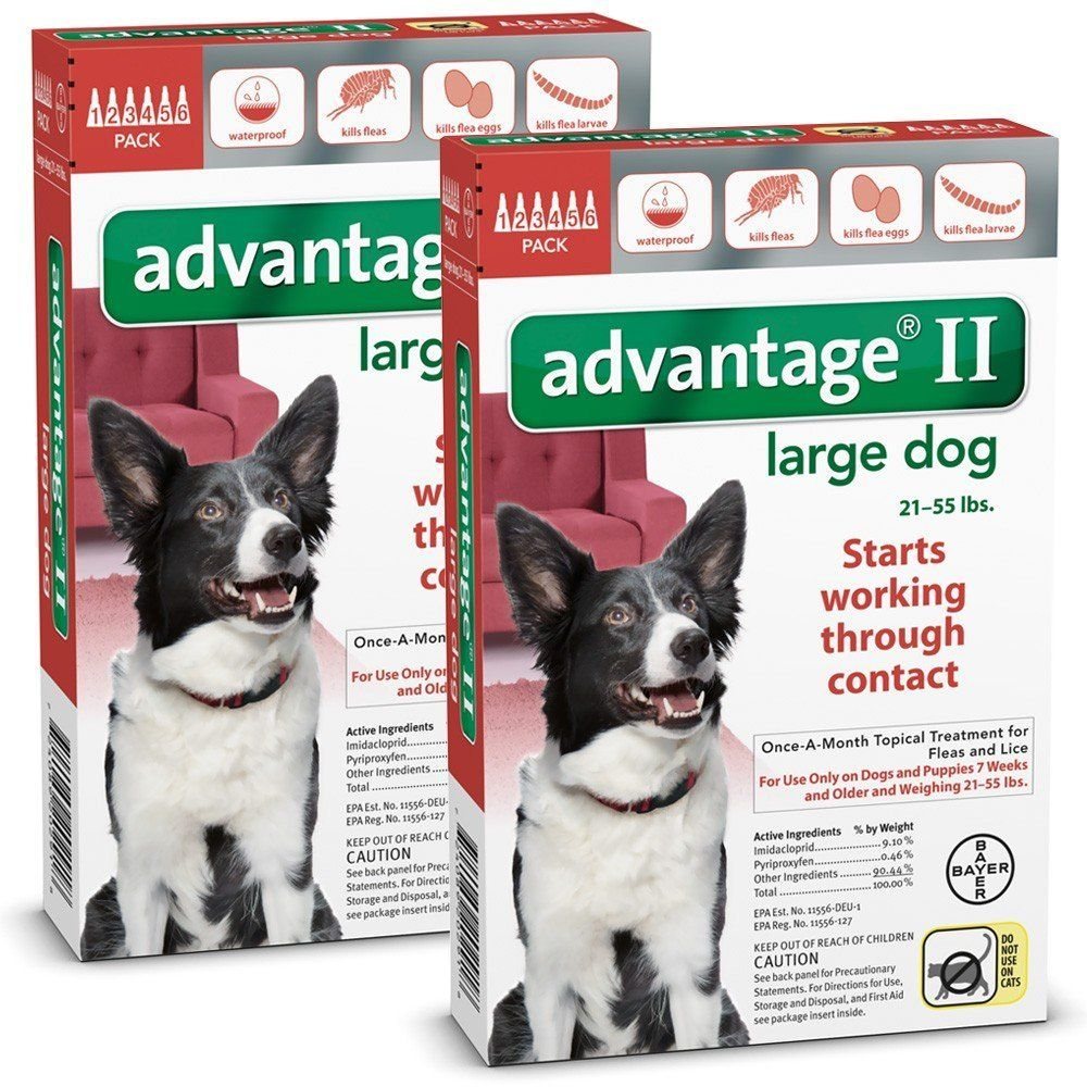 Learn More By Visiting The Image Link This Is An Affiliate Link Mypet Dogs Fleas Dog Itching