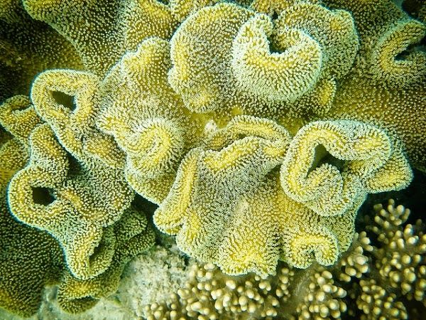 Derawan Coral Reefs #travelington #travel #traveling #vacation #destinations #travelguide #beach #island #tours #bali #lombok #asia