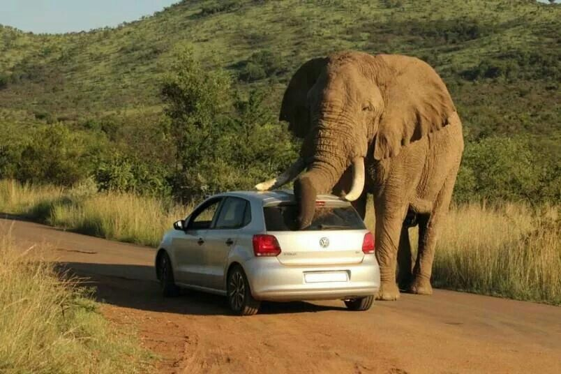 Pin by debbie mccue on elephant love elephant animal