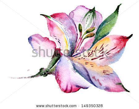 Peruvian Lily Alstroemeria Friendship Tattoos I Like Pinterest Watercolor Flowers Watercolor Tattoo Flower Flower Illustration