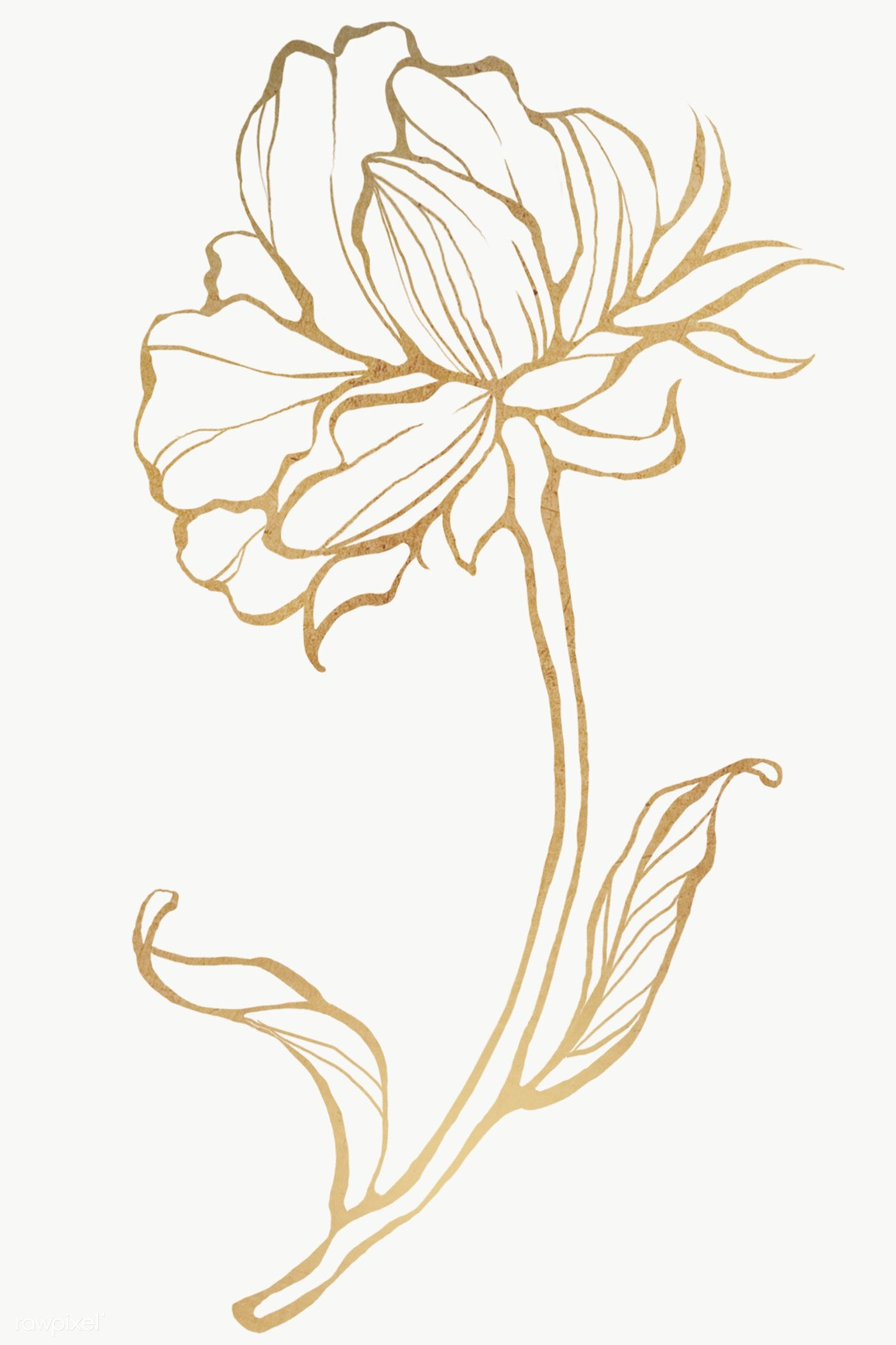Download Premium Png Of Gold Flower Outline Transparent Png 2019784 Flower Outline Line Art Flowers Flower Drawing