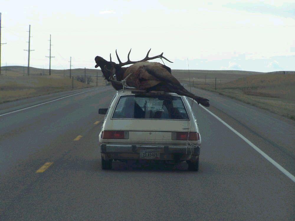 redneck - hahahahaha!!!!!