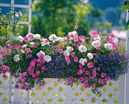 Id e de balconniere fleurs au balcon pinterest jardins plante jardin et jardinage - Jardin au balcon ...