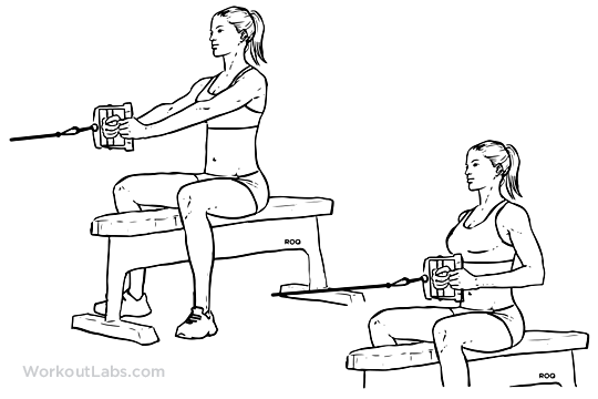 seated    low cable row