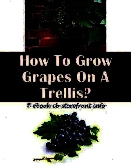 3 Enthusiastic Cool Tri How Many Grape Vines To Plant  Grape Growing Locations 3 Enthusiastic Cool Tricks How To Grow How Many Grape Vines To Plant  Grape Growing Locatio...
