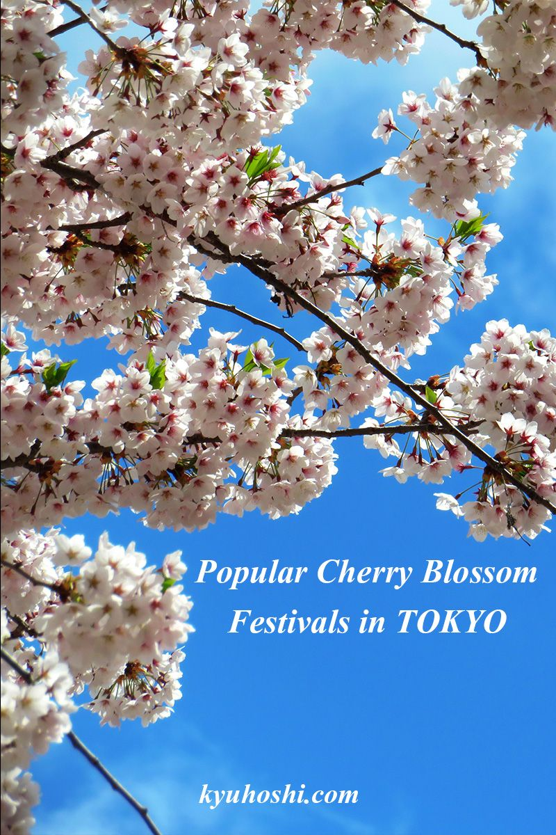 Best Cherry Blossom Festivals in Tokyo in 2020 Cherry