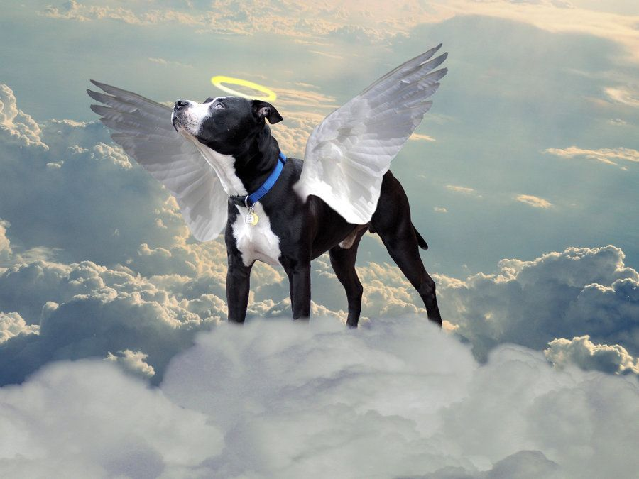 Do All Dogs Really Go To Heaven Dog Heaven Pet Bereavement Vet Tech