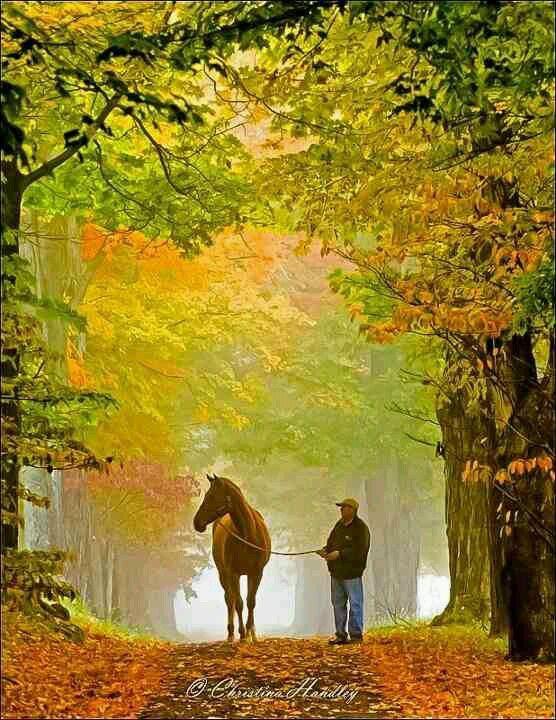 Unbeschreiblich schön - ein Spaziergang mit #Pferd im #Herbst  The beginning of autumn