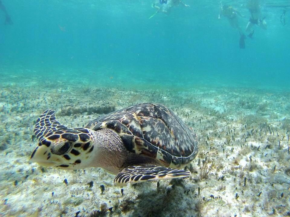 My little friend from the diving trip in Cozumel Mexico