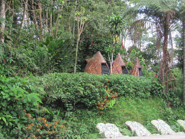 La selva de Ecuador