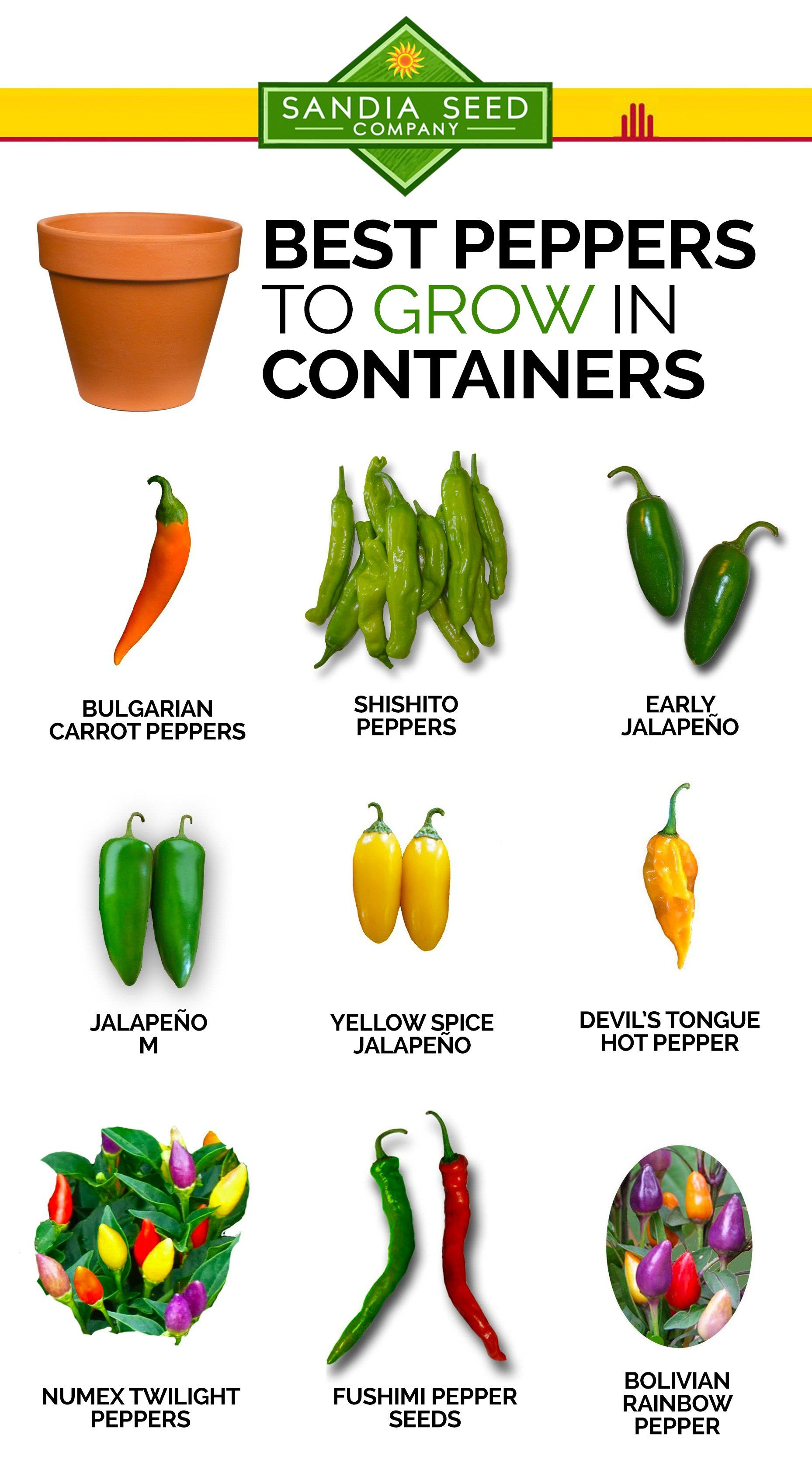 Here Are Our Recommendations Of The Best Peppers To Grow 400 x 300
