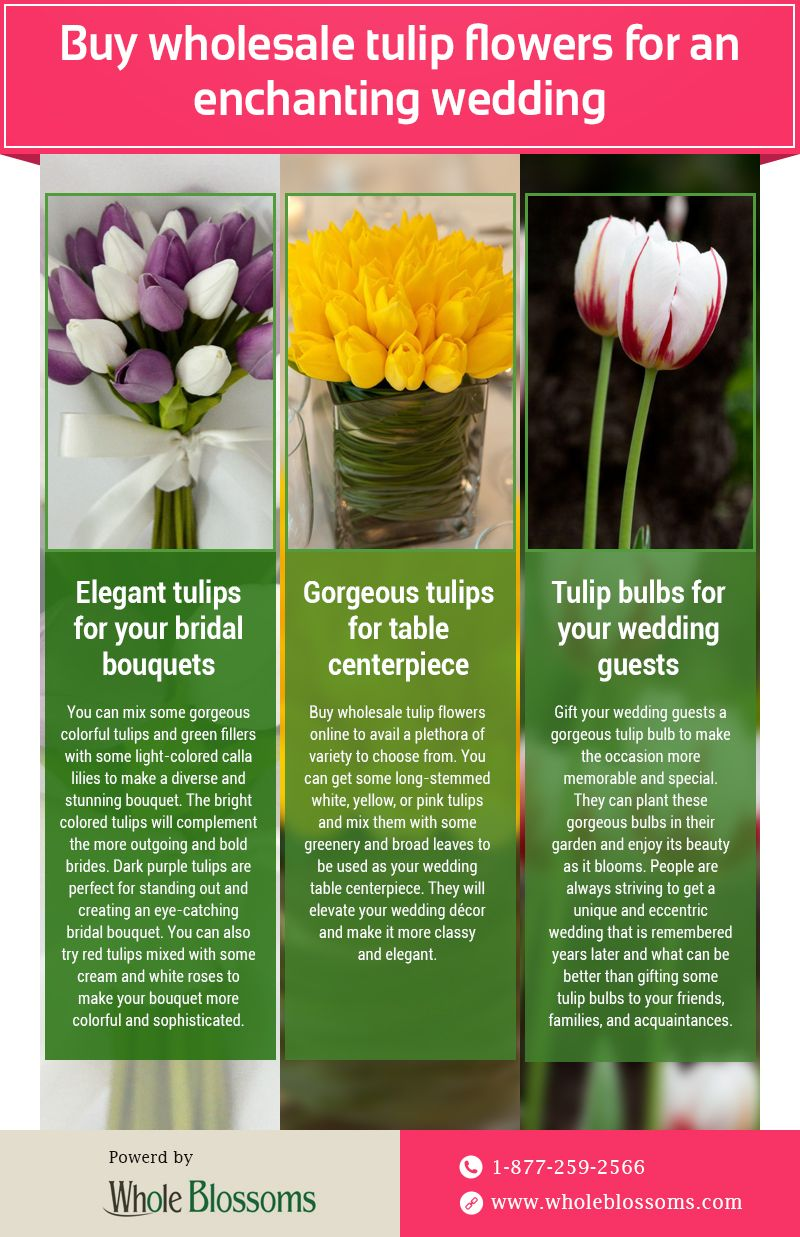 This Infographic Shares Information About The Tulip Flowers For Wedding Decorations If You Want To Buy Whole Tulips For Sale Tulips Flowers Tulips Arrangement