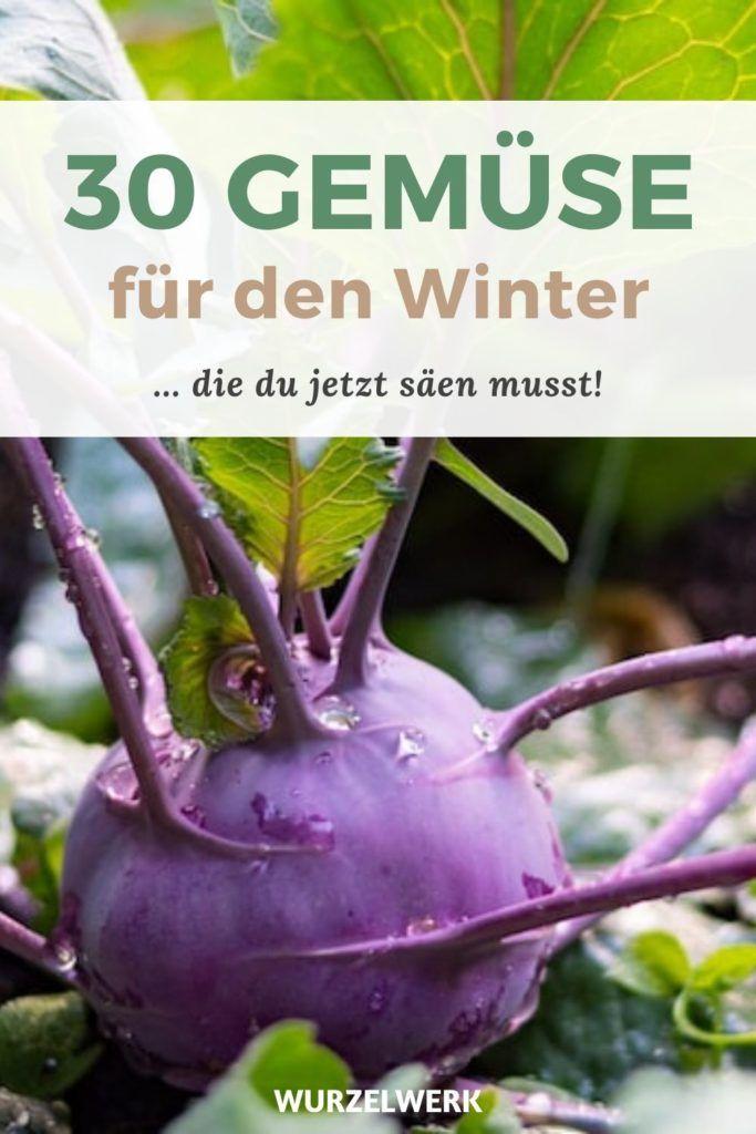 30 Gemüse, die du im Winter ernten kannst (und jetzt säen musst!) – Wurzelwerk