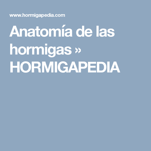 Anatomía de las hormigas » HORMIGAPEDIA | El maravilloso mundo de ...