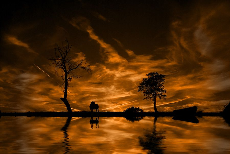Sunset Silhouettes by Evans Lazar