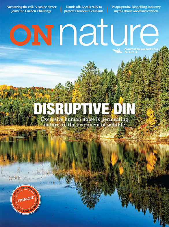 On Nature Magazine Fall 2018 Disruptive Din Excessive Human Noise Is Permeating Nature To The Detriment Of Wildlife Answering Nature Fall 2018 Magazine