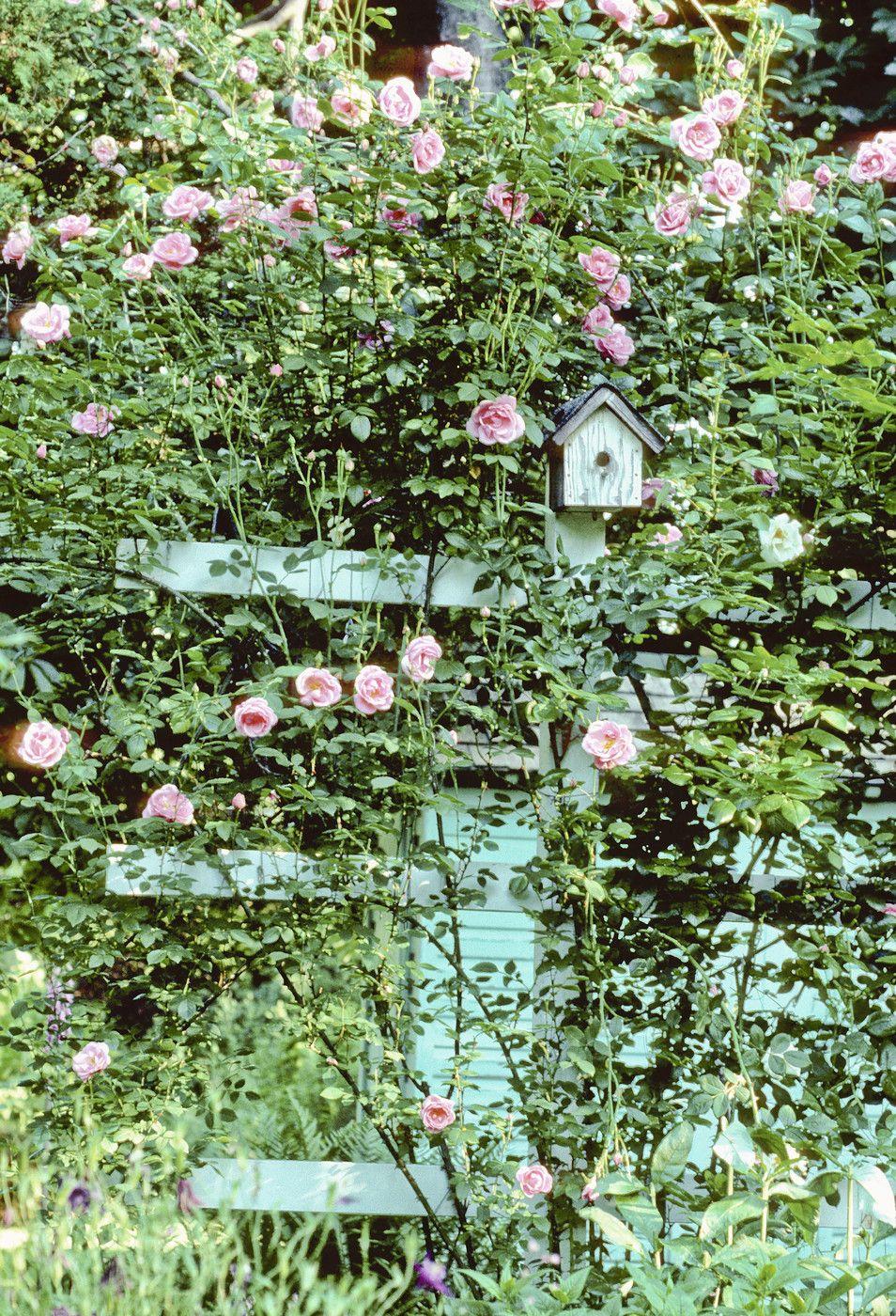 Green Country Garden | gardens | Pinterest | Garden photos, Gardens on french country vegetable gardens, french country rose art, french country trees, french country flower, french country cottage gardens,