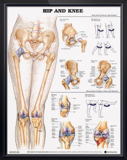 39+ Joint between leg and pelvis ideas