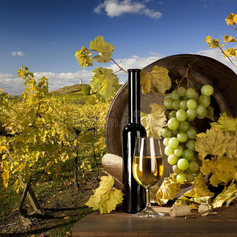 Wine. Bottle of wine and wine cask on the landscape