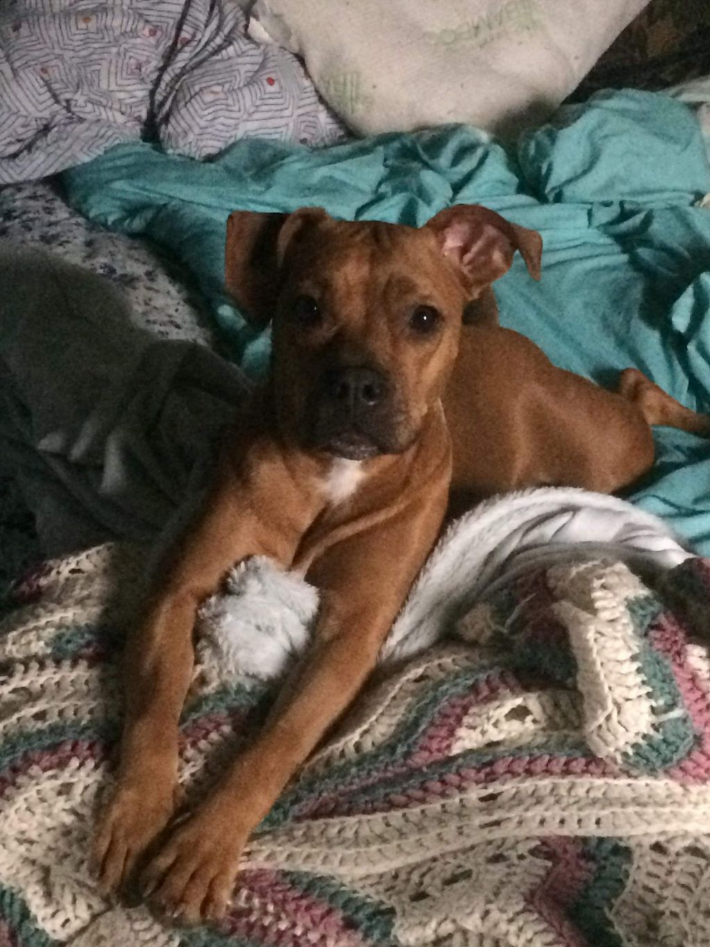 Adopt Ginger on Rescue dogs, Animal rescue, Dogs
