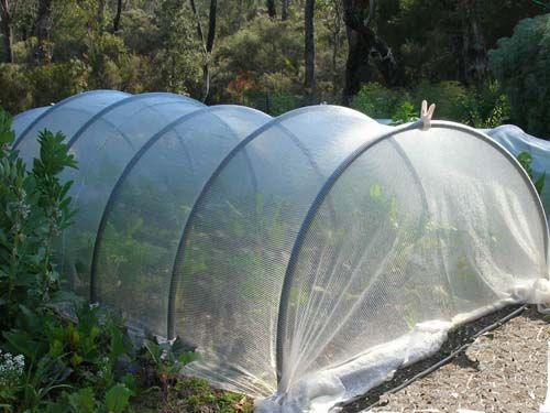 Floating row covers over pvc hoops Vegetable Garden Pinterest