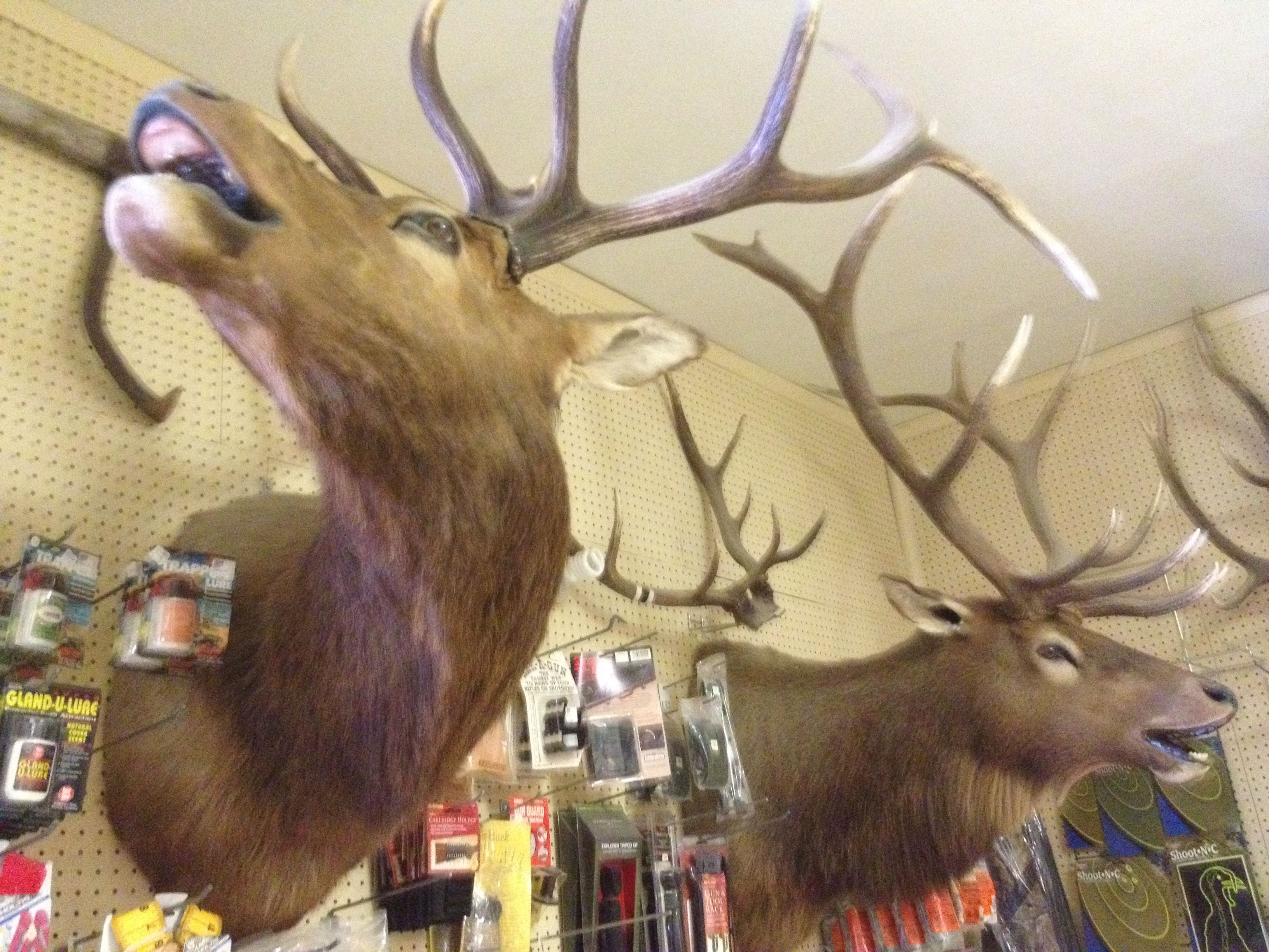 Ick! I hate seeing animal heads mounted on a wall for one, but deer ...