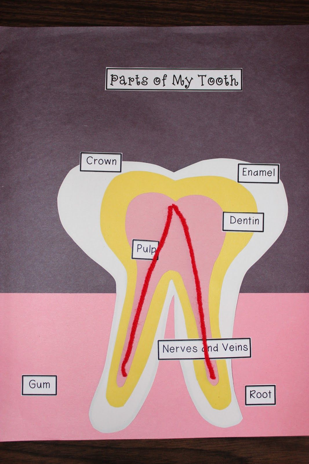Teach Dream Inspire Tooth Diagram