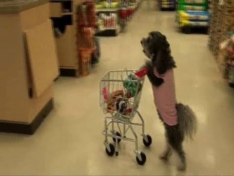 Retail Therapy Woof Clips Dogs Funny Animal Videos Funny