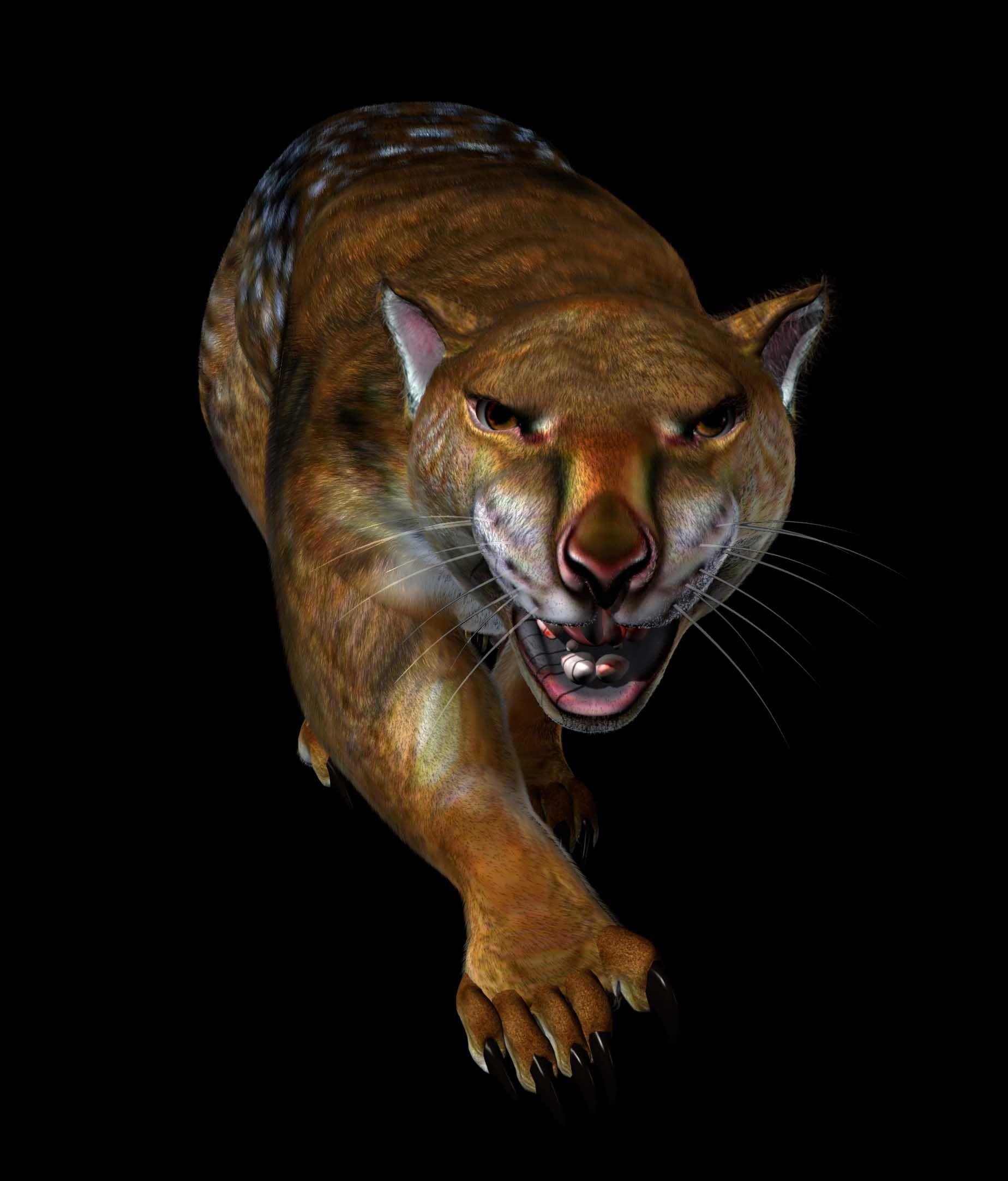 Lost Predator Thylacoleo The Marsupial Lion