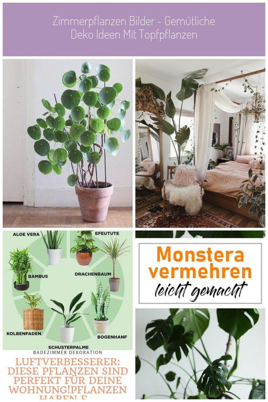 Pflegeleichte Zimmerpflanzen Gluckstaler Topfpflanzen Pflanzen Wohnung Zimmerpflanzen Bilder Gemutliche Deko I In 2020 Pflanzen Zimmerpflanzen Bilder Zimmerpflanzen