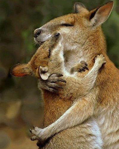 Les 25 meilleures id es de la cat gorie kangourous sur pinterest kangourou australie - Demenager machine a laver ...
