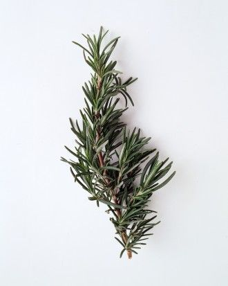See The Rosemary In Our Your Ultimate Guide To Flower Meanings