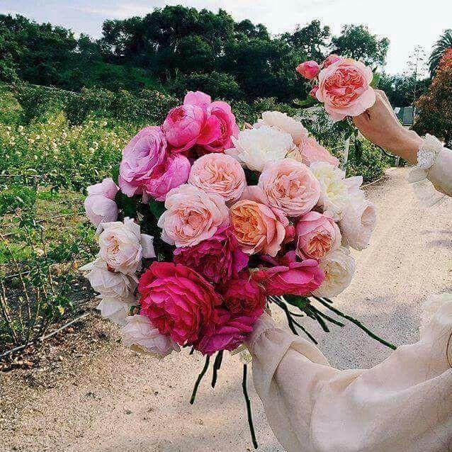 Pin by Riham Bazzal on flowers Flower bouquet wedding