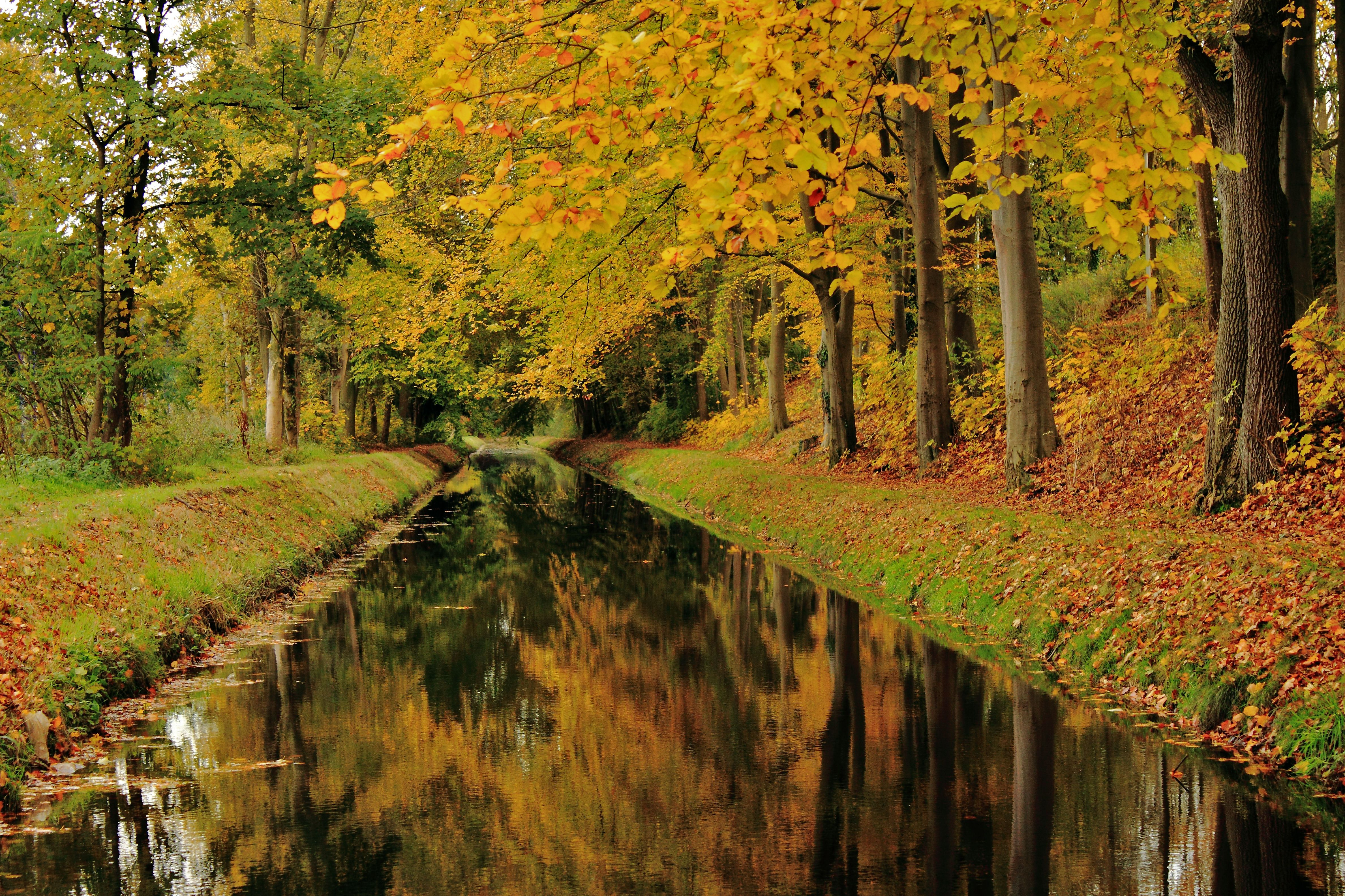 Autumn decorates the stream nearby  the sluice at the Twente-Rijn canal. Hengelo, Twente, the Netherlands. (by: harry eppink)