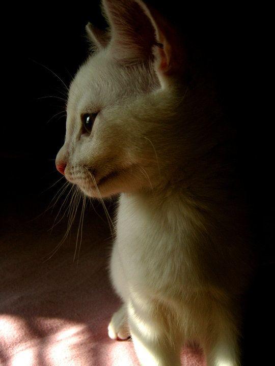 A Kitten in the Light of Morning