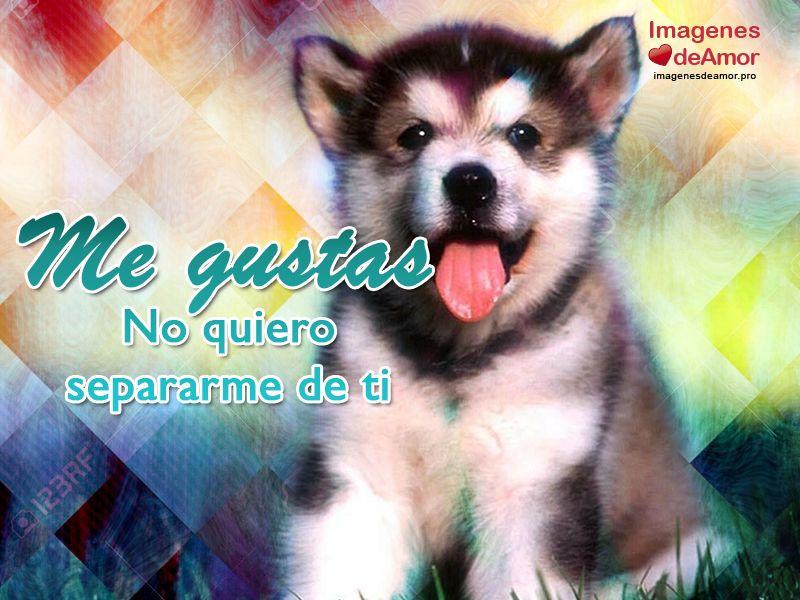 15 Imagenes De Perritos Con Frases De Amor Super Tiernas Perros