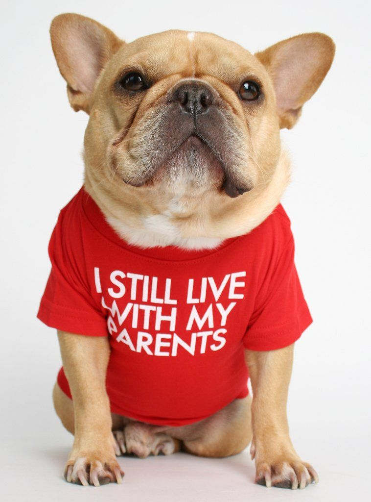 Live With My Parents Dog Tee Dog Shirt Dogs Tee Bulldog