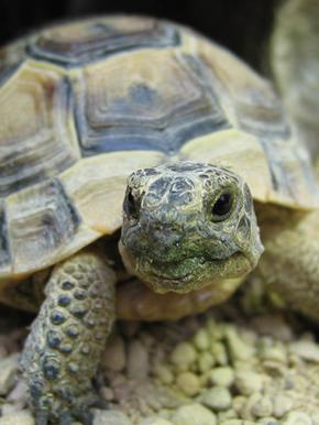 Epingle Sur Turtle Love