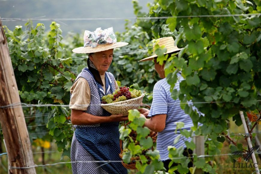 Povestea cramei Liliac. Cum a reusit un austriac sa faca vinuri premium in inima Transilvaniei - www.foodstory.ro
