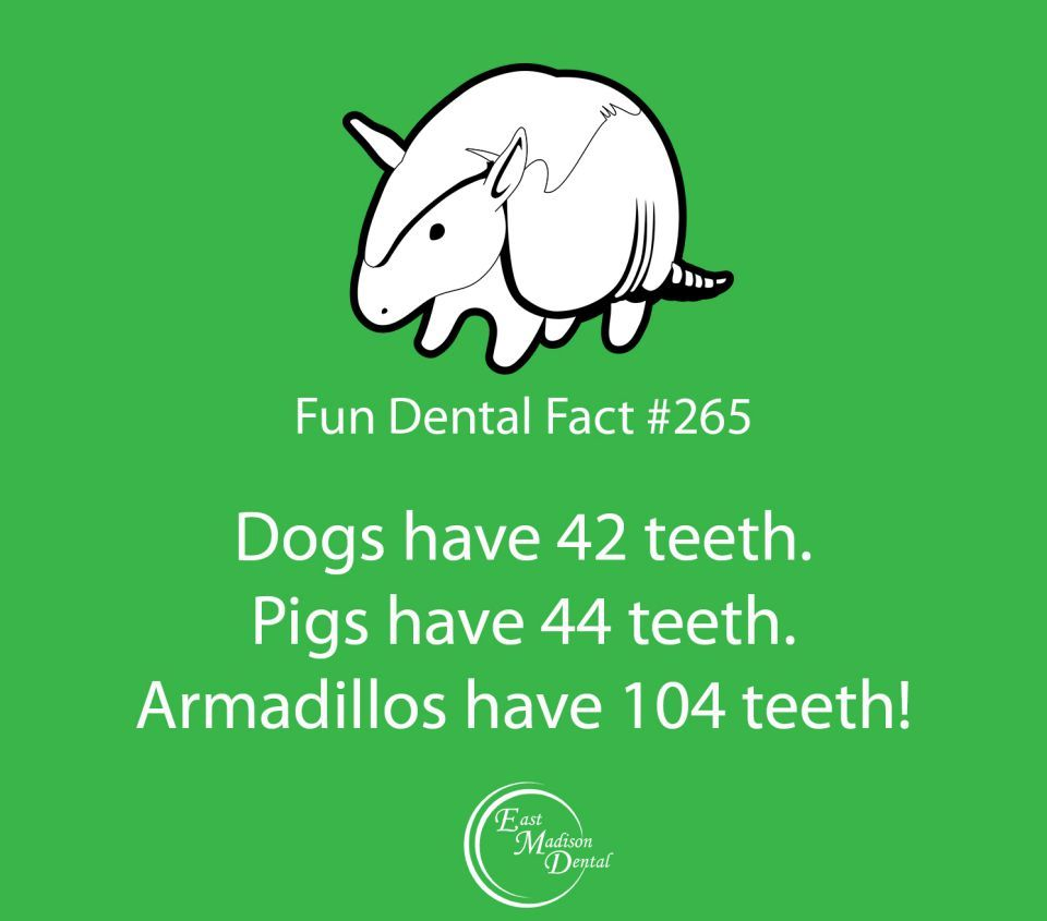 Our fun dental facts are guaranteed to make you smarter! #themoreyouknow #dentalcare #dental #dentalhumor #dentaltips #oralhealth #oralcare #dentalfacts