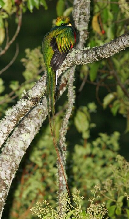 There are over 830 species of birds found inCosta Rica