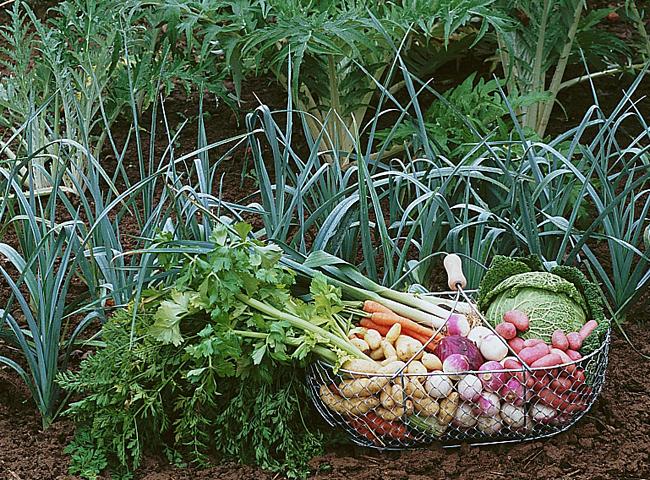 Calendrier des travaux de novembre au jardin | Jardins ...