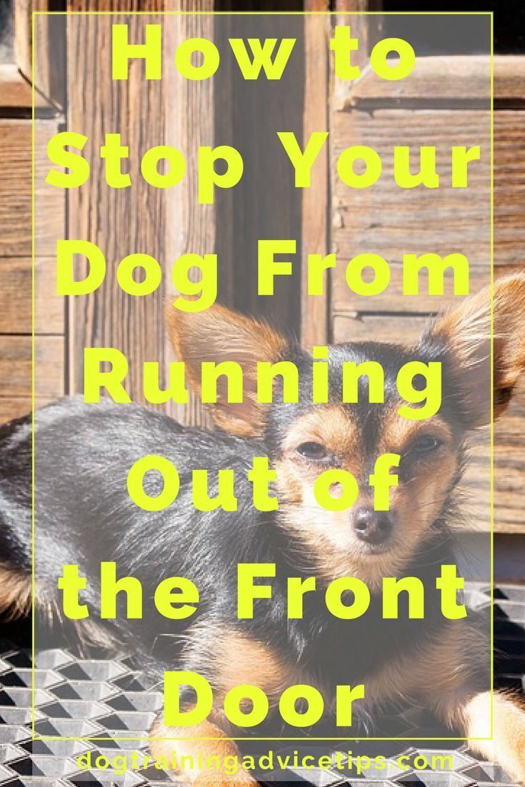 How to stop your dog from running out of the front door