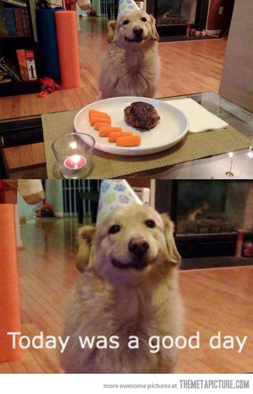 Special Day Special Food Funny Animal Pictures Funny Dog
