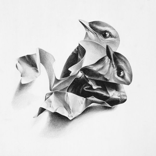 Wax Pencil Bird Drawings by Christina Empedocles