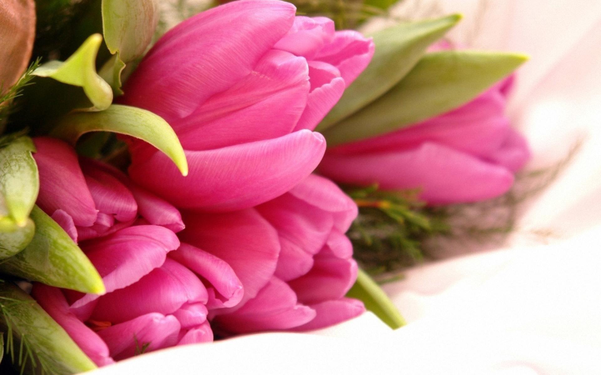 Tulip close up the dissected bouquet pinterest beautiful e261fbec73aeace1ae97b4826edf9618g izmirmasajfo Choice Image
