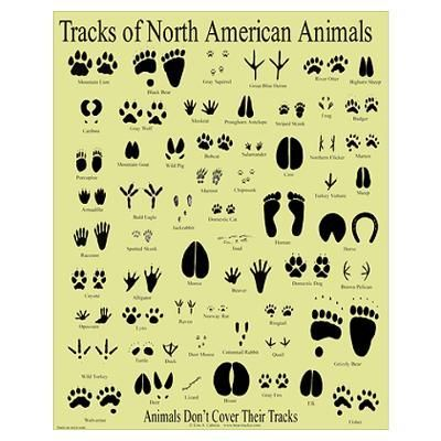 128774870573363059 on Nocturnal Animal Themed Posters